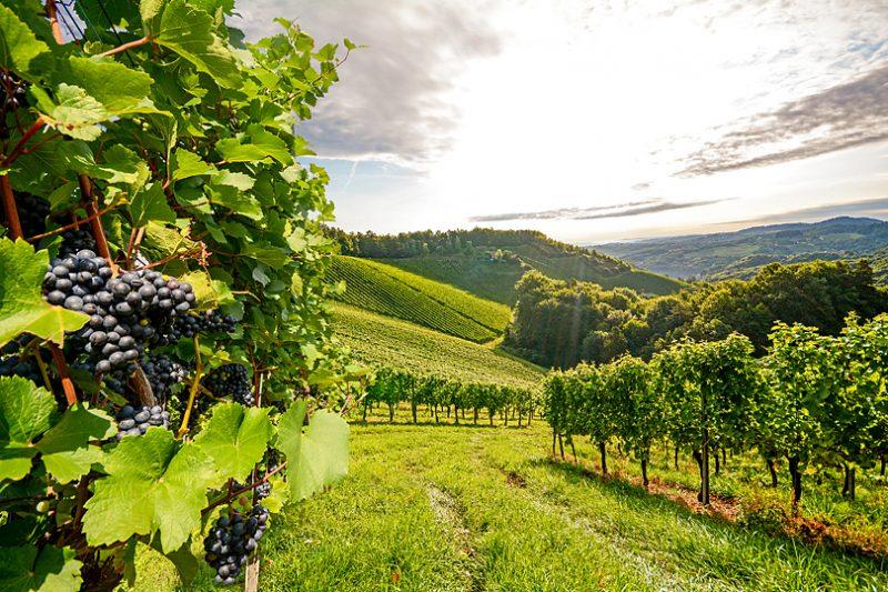 テロワールがワインの味と個性をつくる