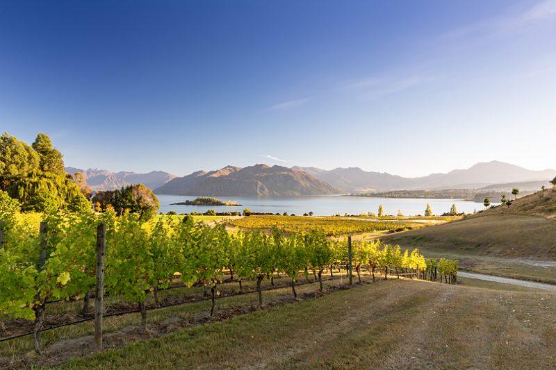 ニュージーランドのワイン