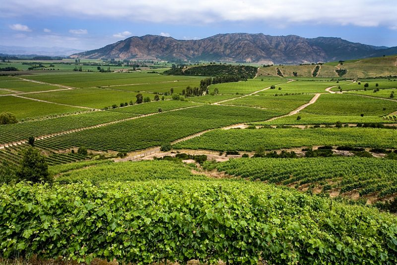 チリのワイン