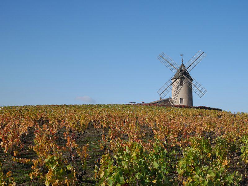 フランスワインを代表する11の産地