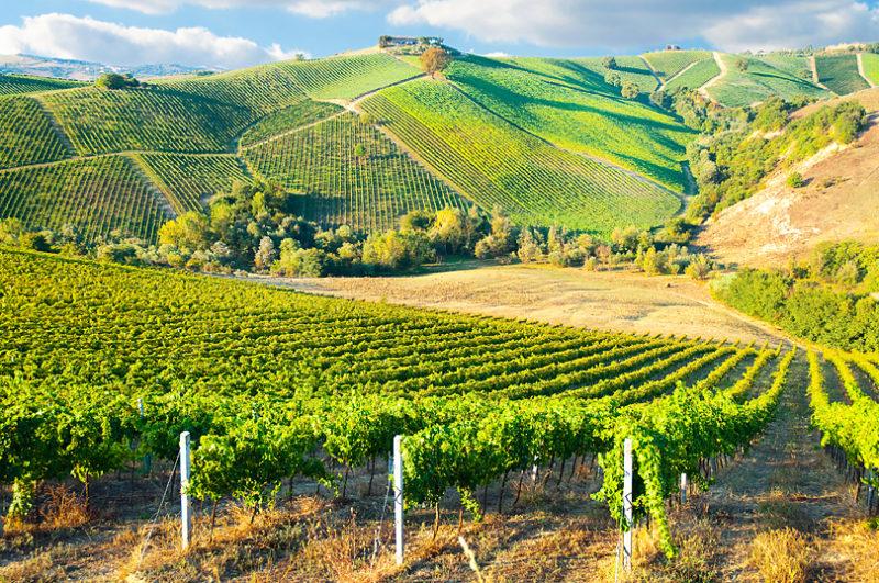 フランスのボルドー地方で生産されるワインの特徴